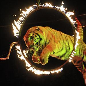 Цирки Палеха
