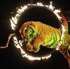Цирки в Палехе